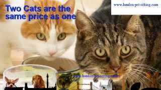 preview picture of video 'South West London Cat Sitter (Wimbledon, Merton, Morden and Wandsworth) | Cat Sitting'