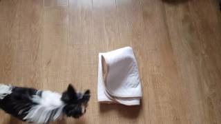 How to use washable puppy dog potty training pads - daily routine