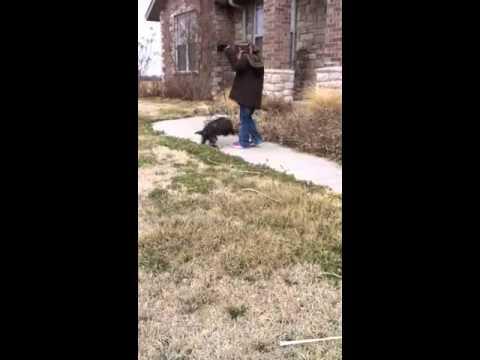 Finn playing in yard