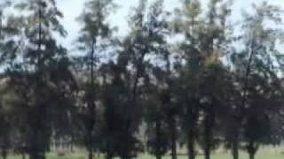 preview picture of video '- Printemps oued fodda.flv'