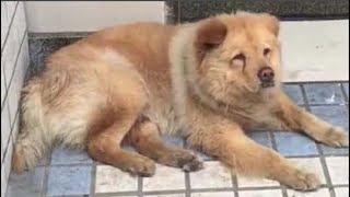 Chú Chó Tìm Chủ Suốt 15 Ngày Ở  Bến Xe Nhìn Mà Rớt Nước Mắt