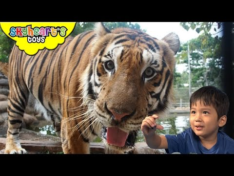FEEDING TIGERS inside a jeep! Zoo Animals Safari Toys for kids playtime in park jungle