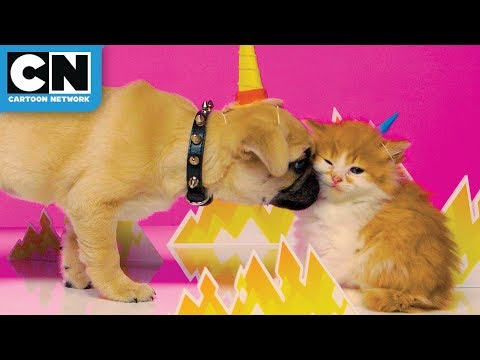 Gumball And Unikitty As Real Life Kitties | Cartoon Network