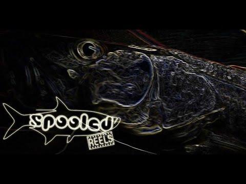 "Snook on fly rod ""Docklight Chronicles v1.3"""