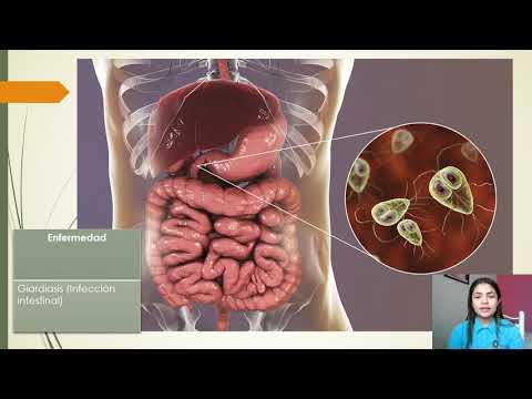 Tratament natural pentru paraziti intestinali