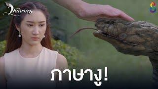 คุยภาษางู | มณีนาคา ช่อง8 | HIGHLIGHT EP8