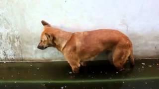 Собака зависака