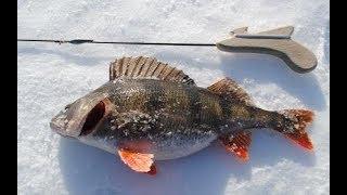 Где ловить окуня на рыбинском водохранилище