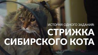 История одного задания: как стригли пушистого кота