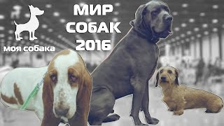 """Моя Собака на выставке! Зачем выставлять собаку? """"Мир собак"""" 30.04.2016"""