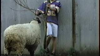 Cortney Fucking with the Sheep