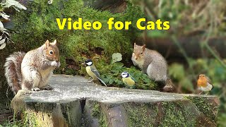 Video for Cats to Watch - Squirrel vs Bird