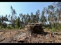На Житомирщині ліснику оголосили підозру про замах на умисне вбивство