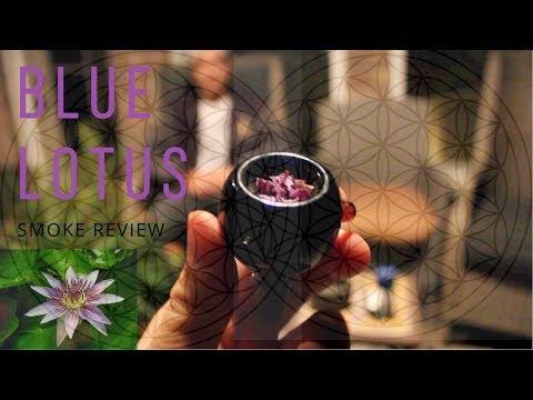 Blue Lotus | Smoke Review | Ep.2