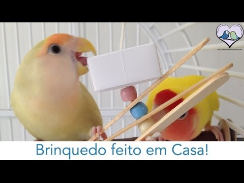 p/ aves: Agapornis