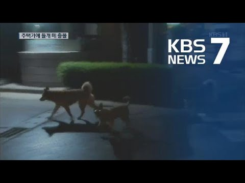 주택가에 들개 떼 출몰…고양이·가축 등 공격 '주민 불안' / KBS뉴스(News)