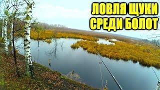 Ловля окуня в ноябре на речке