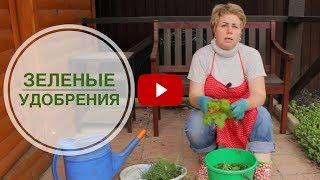 Как сделать зеленые удобрения 🌟 Органическая подкормка своими руками 🌟сад огород hitsadTV