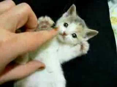 قطوه جناااااااااااااان