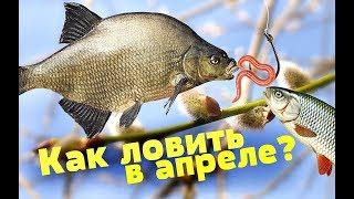 Какая рыба клюет в конце января