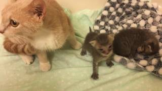 Rescuing Two Tiny Kittens! Will Mama Cat Nurse Other Cats Babies?