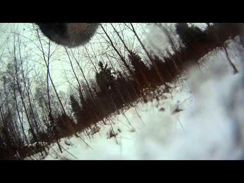 Krievu-Eiropas laika aļņu medības (Rauna)