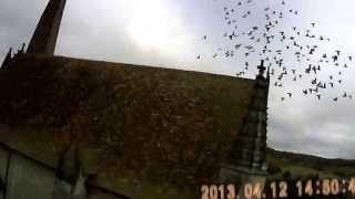 preview picture of video 'Eglise (Church) saint sauveur : pigeon'