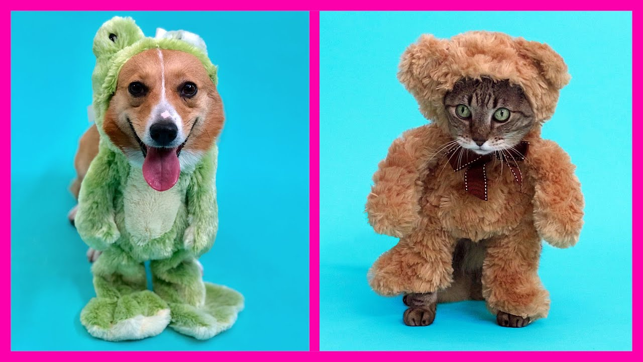 Easy DIY Pet Costume thumbnail