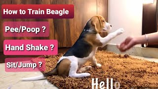 How To Train Beagle Puppy / Dog. Tips And Tricks To Train Dog