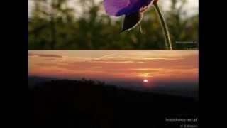 """K.Krawczyk """"Widzę kraj jakiś"""" poezja Tetmajera"""