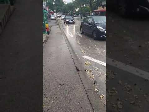 """Kiša """"donela"""" šljunak u Njegoševu iz ulice Svetolika Rankovića"""