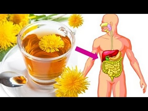 Video If You Drink Dandelion Tea Everyday Then This Will Happen To Your Body - Dandelion Tea Benefits
