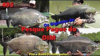Muitos e grandes peixes no Pesque Pague do DIM - Fishingtur 495