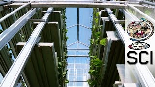 Vertical Farming: The only way is up!