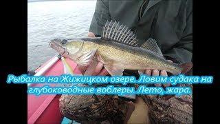 Рыбалка на Жижицком озере.  Ловим судака на глубоководные воблеры  Лето, жара