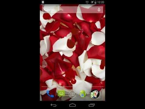 Video of Rose petals Live Wallpaper
