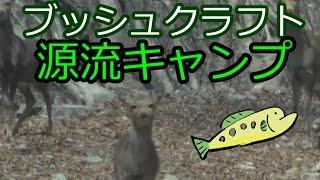 【鹿に遭遇】ブッシュクラフト源流キャンプ