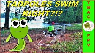 Micro FPV Drone Build - Armattan Tadpole (BETAFLIGHT SETUP and TUNE!)