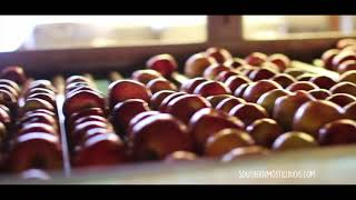 Shawnee Forest Country Apple Picking Season