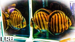 Wild Cool and Crazy Rare Fish Dean Tweedles Fish Room Tour
