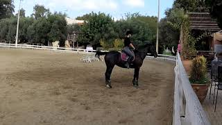 Desensitizing a Dressage Horse