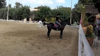 Desensitizing a Dressage Horse