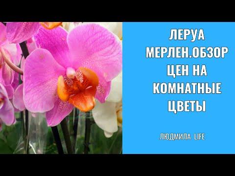 Леруа Мерлен.Обзор цен на комнатные цветы.