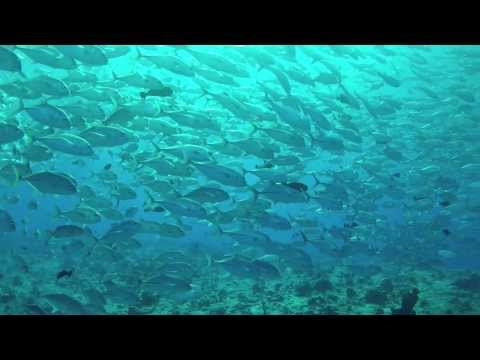 Safari auf der Ocean Hunter III, Palau allgemein,Palau