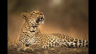 A Leopard's Legacy Trailer