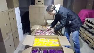 Тюльпаны Оптом к 8 марта в Минске. Компания GRAND Тюльпан.