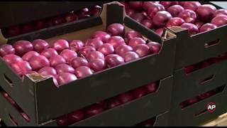 Молдова крупнейший поставщик яблок в Россию