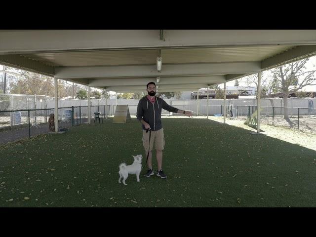 Video #14:  SSCD – Sm Dog