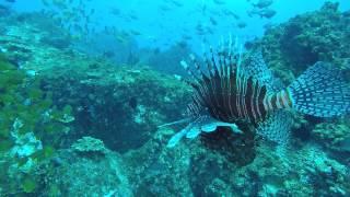 Маска для подводной охоты Picasso Panorama Mirror Lens - New 2017 от компании Магазин Calipso dive shop - видео