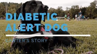 Diabetic Alert Dog Feature: Carter's Story
